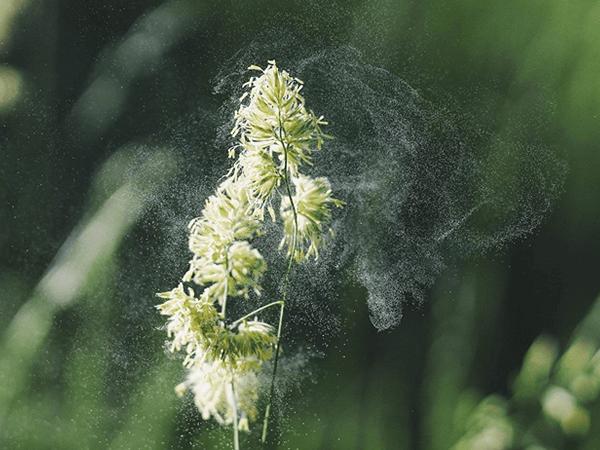 花粉アレルギー
